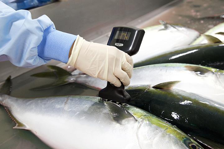 魚体脂肪率